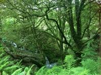 greenwoodscorrisphoto